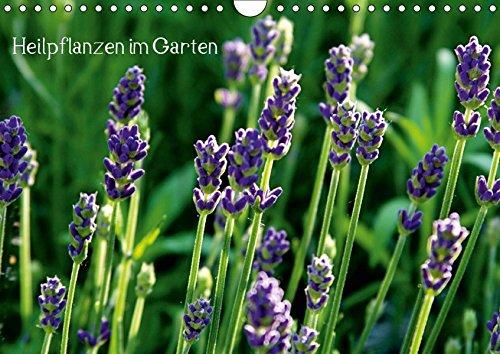Heilpflanzen im Garten (Wandkalender 2019 DIN A4 quer): Attraktive Blüten und Blätter mit medizinischer Wirkung (Monatskalender, 14 Seiten ) (CALVENDO Gesundheit)