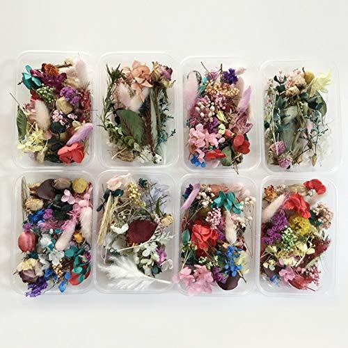 little finger - 1 Caja de Flores secas Naturales para decoración de Manualidades
