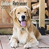 Avonside Publishing Ltd: Golden Retriever Calendar 2020