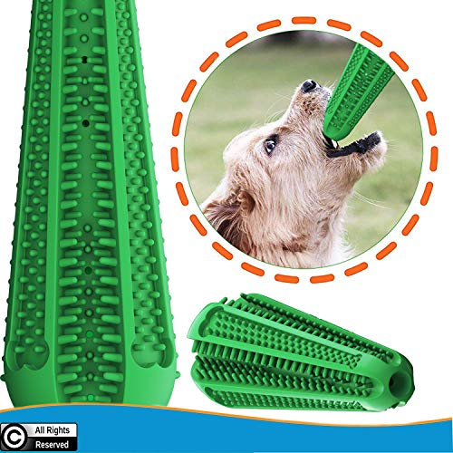 dog teeth cleaning tools