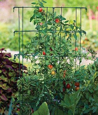 Burpee Extra Large Heavy Gauge Tomato Cage 3 Extenders | 18' x 18' x 24' |...