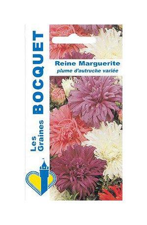 Les Graines Bocquet - Graines De Reine Marguerite Plume D'Autruche Variée - Graines Potagères À Semer - Sachet De 0.8Grammes