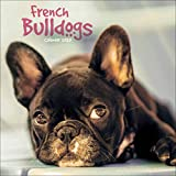 French Bulldogs Mini Square Wall Calendar 2020