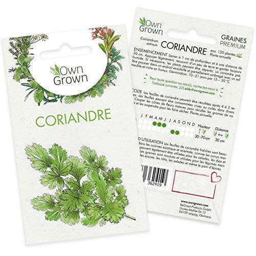 Graines de coriandre (Coriandrum sativum), semences de coriandre cultivée OwnGrown, Semis pour environ 120 plantes