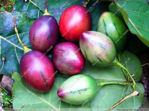Mixte Tomates cerises Saint Fruit Tomate Graine exotiques savoureux fruit juteux légumes Graine culture facile 120 Pcs plantes ornementales 2
