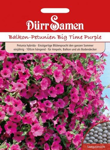 Dürr Samen 1954 Balkonpetunie Big Time Purple (Balkonpetuniensamen)