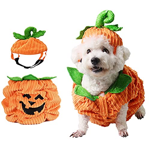 Halloween Pumpkin Dog Costume