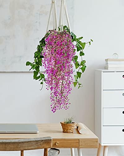 Omldggr Plantas
