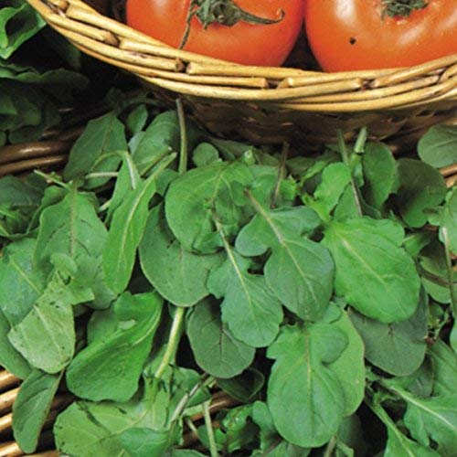 Suffolk herbes - Salade de roquette biologique - 750 graines
