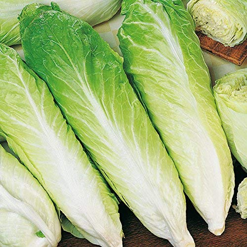 Suffolk Herbes - Pain de Sucre Chicorée biologique - 250 graines