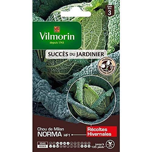 Vilmorin - Sachet graines Chou de Milan Norma HF1