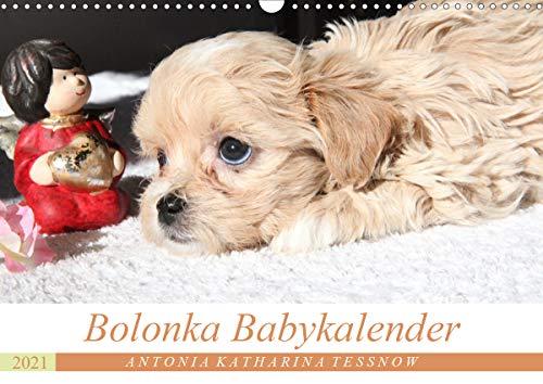Bolonka Babykalender 2021 (Wandkalender 2021 DIN A3 quer)
