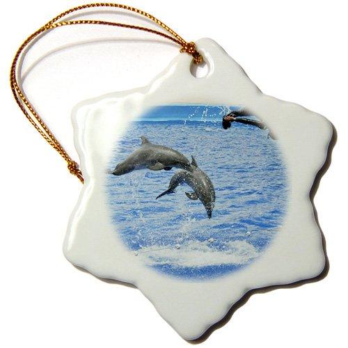 3dRose ORN 37747_ 1Zwei Delphine und eine Trainer Tauchen in ozeanographische Aquarium in Valencia, Spain-Snowflake Ornament, 3Zoll, Porzellan
