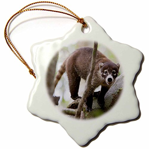 3dRose orn_87183_1 White-nosed Coati Wildlife, Corcovado NP Costa Rica SA22 JGS0078 Jim Goldstein Snowflake Porcelain Ornament, 3-Inch