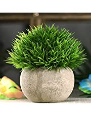FancyOutlets Artificial Bonsai Grass Plants And Topiaries Shrubs with Plastic Pot (Green, 1 Piece)