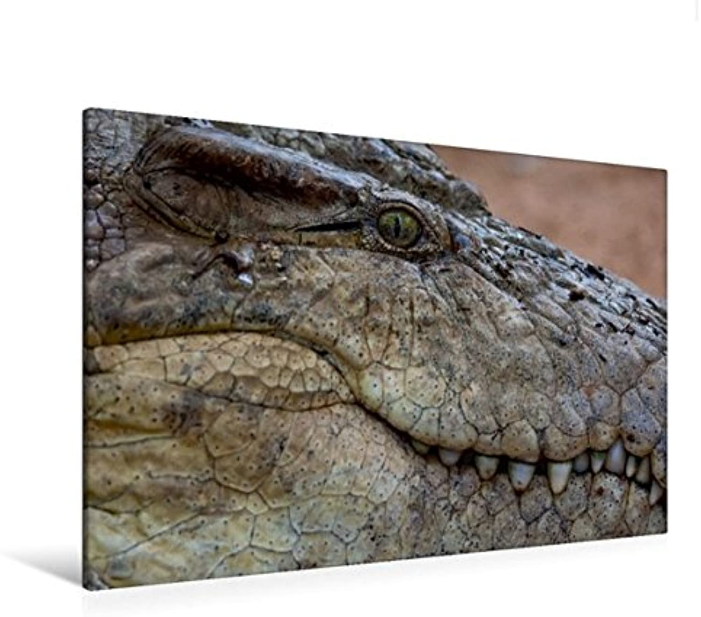 Calvendo Premium Textil-Leinwand 120 cm x 80 cm quer, Krokodile lauern am Ufer des Mara-River auf Beute.   Wandbild, Bild auf Keilrahmen, Fertigbild auf echter Leinwand, Leinwanddruck Tiere Tiere