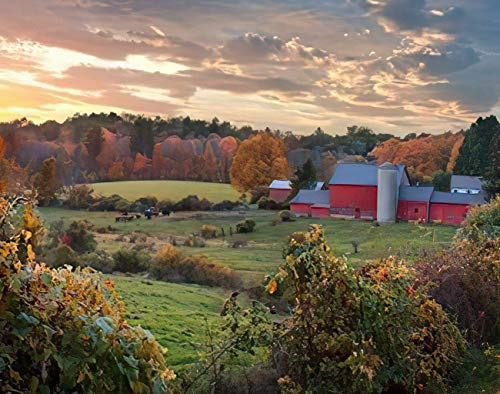 Amiiya Fall Barn Paint by Number Kits, Autumn Scene of A Dairy Farm Cows at Pasture and Red Barn DIY Canvas Acrylic Oil Painting for Kids Adults Beginner for Home Wall Decor 16 x 20 Inch