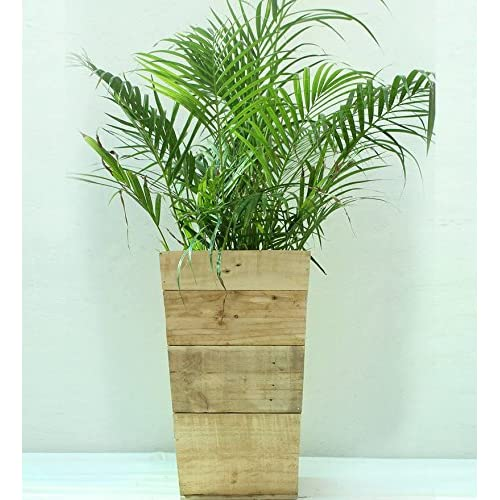 Green Gardenia Wooden Slap Planter -Large