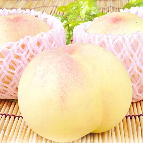 国華園 岡山産 清水白桃 4�s 1組 モモ