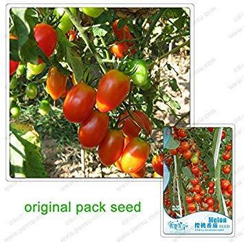 10 graines/Paquet, graines de tomates cerises, petite tomate, balcon plante en pot Fruits et légumes, graines de fruits