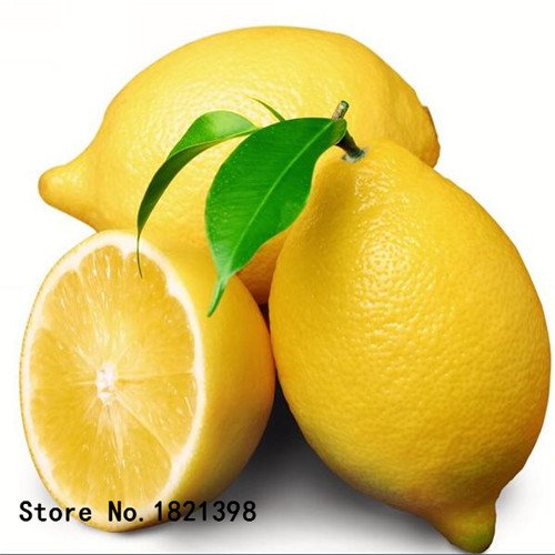 50 pcs/sac graines de citronnier avec emballage hermétique * graines de fruits Heirloom disponibles en plein air à l'intérieur de * graines de citron Livraison gratuite 5