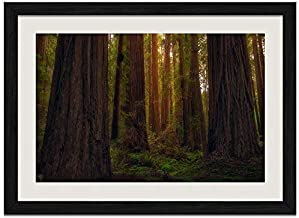 popeven USA California Redwoods Forest Trees Wall Art Print Framed Poster Wall Decor for Bedroom Living Room Office