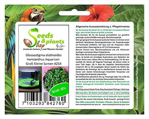 Stk - 60x Glossostigma elatinoides Hemianthus Aquarium Pflanzen - Samen #254 - Seeds Plants Shop Samenbank Pfullingen Patrik Ipsa