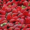 VISTARIC 40pcs Arbres fruitiers Graines Plantées Dwarf Graines bio Douce Kumquat orange fruits en pot Graines Mandarine jardin d'agrumes graines Bonsai #3