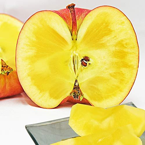 山形産 蜜入りりんご 高徳(こうとく)  1kg 約6玉前後