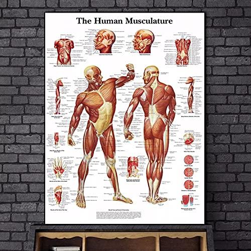 GUDOJK Pittura Decorativa su Tela The Human Musculature Art Canvas Poster e Stampe Sistema del Corpo Umano Dipinti su Tela sul Muro Immagini artistiche Decorazione della casa-16x24 inch