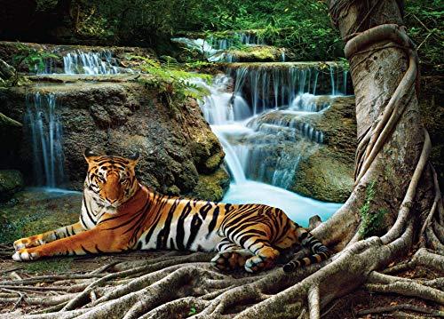 Fotobehang FTNm2652 fotomurals tijger