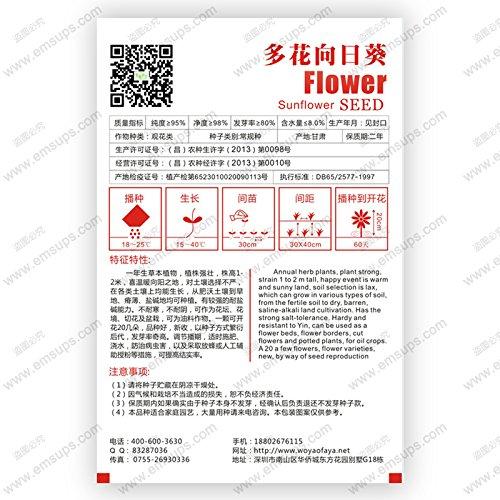 100 graines / Paquet Différentes vivaces Graines Gladiolus fleurs, rares Graines Épée Lily très beautoful pour la maison jardin plantation