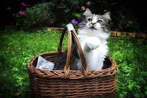 Puzzle 500 Teile Rätsel Für Erwachsene Kinder Jugendliche-Katze Im Korb