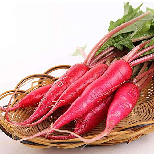 Frühling und Herbst einfach Aussaat rote Haut weißes Fleisch Obst Rettich Samen Wasser Rettich Samen 500 Gramm Original