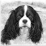Pintura por Números Perro animal blanco y negro Bricolaje Pintura al óleo para Colorear por números en Lienzo de Lino decoración de Arte de Pared 16x20 Inch sin Marco -HYS111