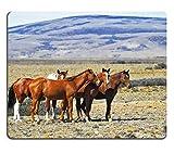 "Luxlady Gaming Mousepad foto ID: 25108763 ""Mandria di wild mustangs Patagonian-Custodia pampas su un giorno d'estate"