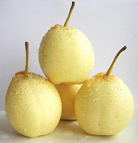Chinese White Pear Nashi Pear Ya Pear Pearple Pyrus Bretschneideri Seeds 10 PCS