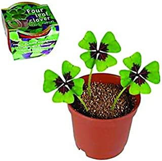 Four-Leaf Clover - Lucky charm - 4 leaf clover - Lucky clover
