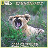 """Baby Animals Calendar 2022: BABY ANIMALS calendar 2022 """"8.5x8.5"""" Inch 16 Months JAN 2022 TO APR 2023 finished and Glossy"""