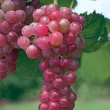 Best is a vine a plant Reviews