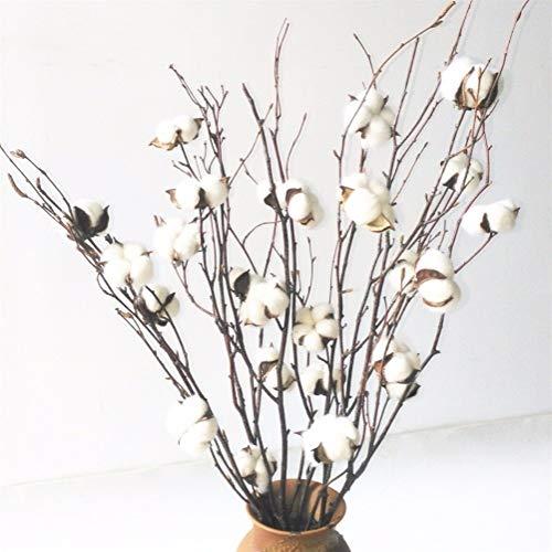Axdyj Gedroogde bloemen Natuurlijke planten Natuurlijke Gedroogde Bloemen katoenen takken Wit Natuurlijke Katoen Boll Ball Branch Spray 20-25