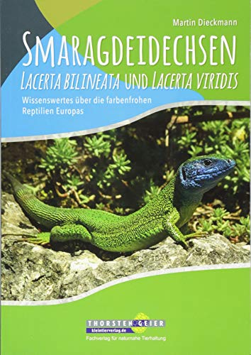 Smaragdeidechsen Lacerta bilineata und Lacerta viridis: Wissenswertes über die farbenfrohen Reptilien Europas