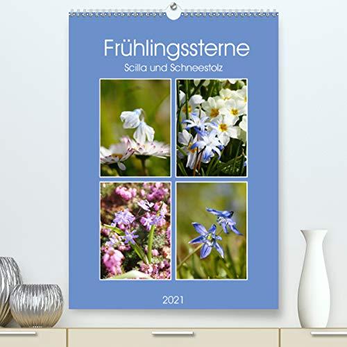 Frühlingssterne Scilla und Schneestolz (Premium, hochwertiger DIN A2 Wandkalender 2021, Kunstdruck in Hochglanz)