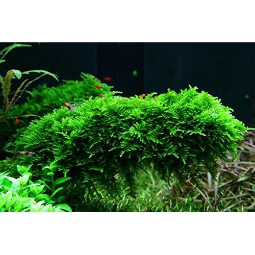 Moos Aquarium Amazon De