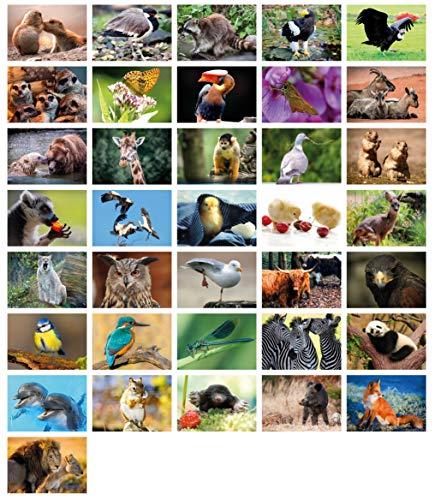 Clever Pool: 36 einfallsreiche Postkarten mit einzigartigen Tiermotiven | ausgewählte Designs und Motive | Sammelspaß für Jung und Alt | ein Postcrossing Set zum Verlieben