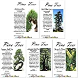 All 5 Big Pack x Pine Tree Seeds of Bristlecone Pine, Japanese Black Pine, Japanese RED Pine, Ponderosa Pine, Scotch Pine, Pine Tree Seeds - Non-GMO Seeds by MySeeds.Co (All 5 Pines)