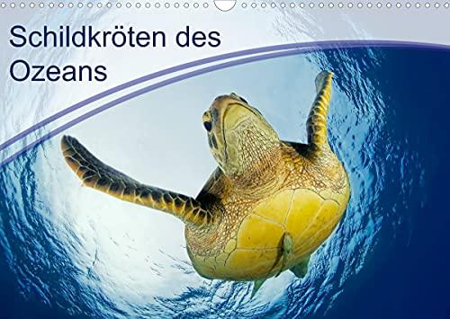 Schildkröten des Ozeans (Wandkalender 2022 DIN A3 quer)