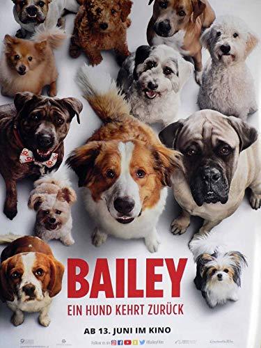 Bailey - Ein Hund kehrt zurück - Teaser - Filmposter A1 84x60cm gerollt
