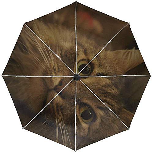 Automatischer Regenschirm Cat Fluffy Muzzle Striped Travel Praktisch Winddicht Wasserdicht Faltbar Auto Open Close