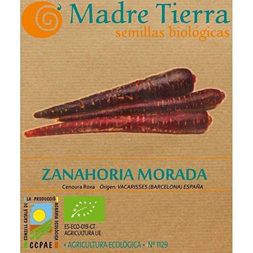 Madre Tierra - Semillas Ecologicas de Zanahoria Morada -(Cenorua Roxa) Origen España - Semillas Especiales - 2 gramos
